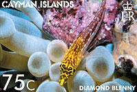 Cayman's new stamps feature the Diamond Blenny on the 75¢ stamp.
